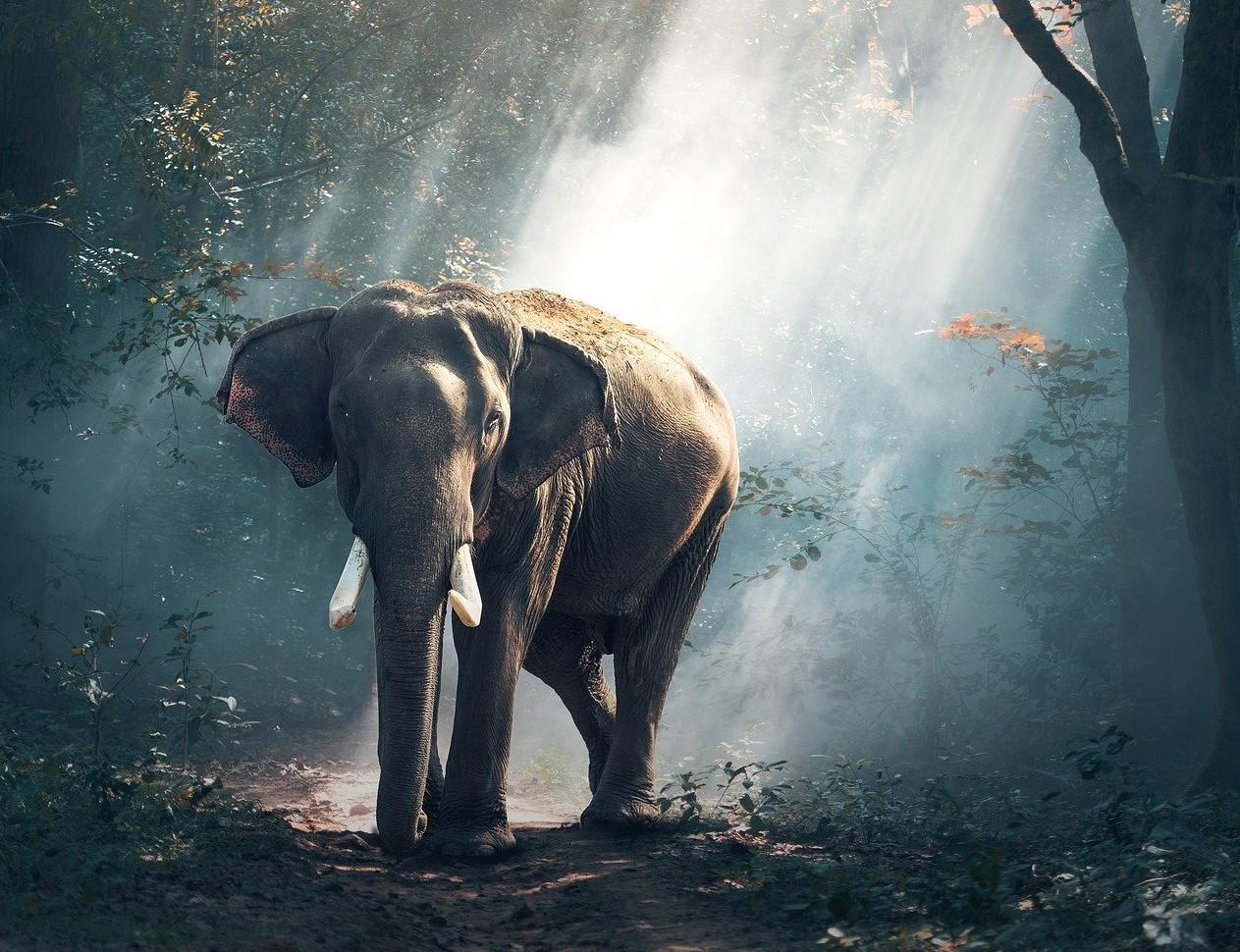 Elefant_Rückfall Beitrag